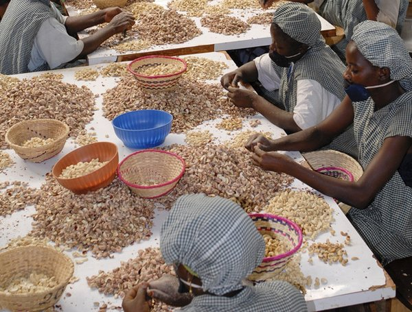 Women cleaning and sorting cashew nuts in a factory in Burkina Faso.