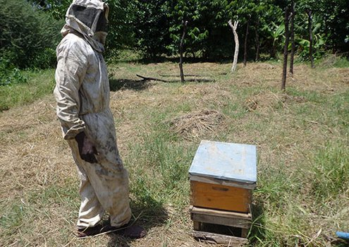 A beekeeper in Sudan, Darfur province, wearing appropriate clothing and looking after a beehive.