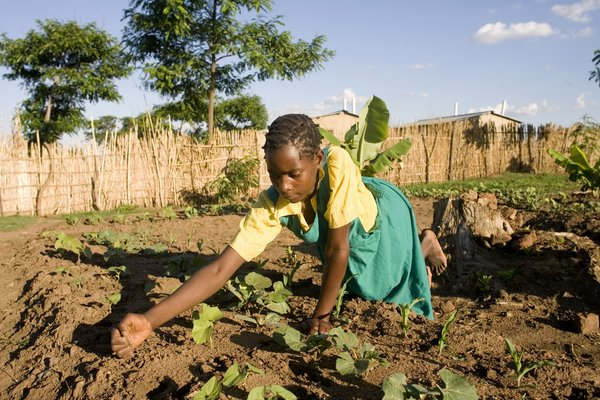 Girl at work at a Farmer Field Life School in Malawi. African rural youth need support.