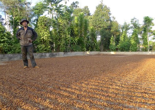 Coffee production in Vietnam heavily relies on irrigation.<br/>Photo: DEZA