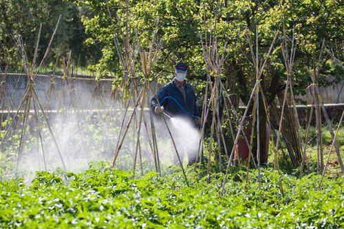 Spraying pesticides over vegetables.