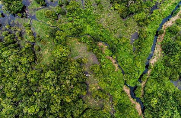 Indonesia is still the holder of the deepest peat areas. Here on the island of Kalimantan Tengah, Indonesia. <br/> Photo: Nanang Sujana/CIFOR