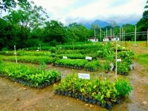 Nursery at the Reserva Ecologica Guapiacu in the federal state of Rio de Janeiro, Brazil.