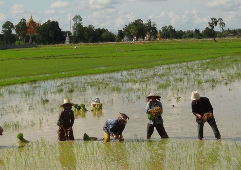 Fortified rice can be very effective to combat micronutrient deficiencies in the diet.<br/>Photo: © IRRI