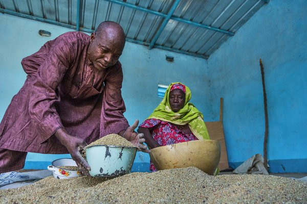 Collecting millet for planting in Gafati, Niger. Critics are concerned that farmers could become more dependent on the megacorporation, particularly in the global South. <br/>Photo: © FAO/Andrew Esiebo