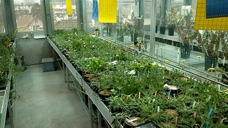 The new generation of hybrid plants in the greenhouse.