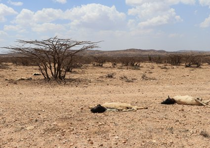Devastating drought in Somaliland: People have lost 70 to 80 per cent of their livestock. <br/> Photo: © Getmann/Welthungerhilfe