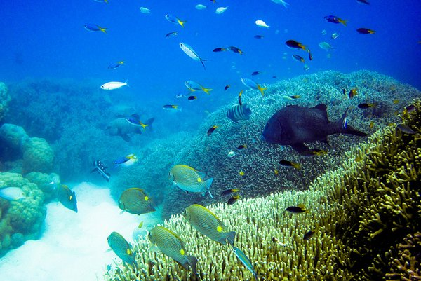 Global warming could cause pacific islands to lose up to 80 per cent of fisheries. <br/> Photo: flickr/Ryan McMinds