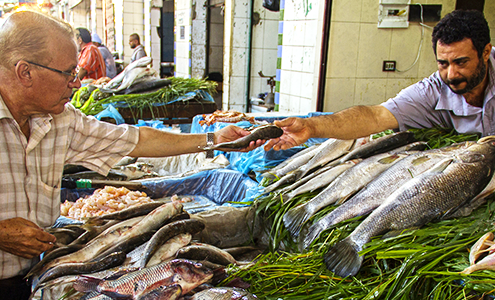 Egypt has an important aquaculture sector. <br/>Photo: © FishConsult