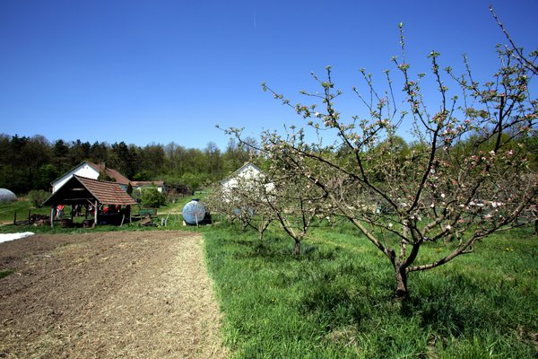 Fields of organically grown vegetables and fruit trees at a farm in Godollo, Hungary. <br/> Photo: ©FAO/Mark Milstein