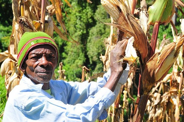 Maize farmers are to gain access to services such as savings, insurance and credit for input and storage of their produce. <br/>Photo: © FAO/M. Mugisha