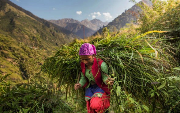 In northern India, the SDC encourages women to diversify the forest products they grow in order to cope with the climate change. <br/> Photo: © SDC